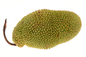 Chempedak, A Species Of Jackfruit