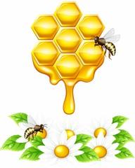 Мед стекающий с сот, векторные ромашки