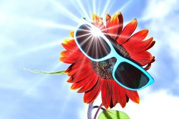 rote Sonnenblume mit Sonnenbrille