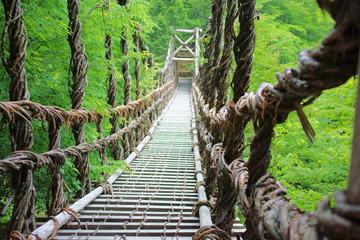 夏のかずら橋