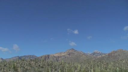 Tucson Arizona cactus desert