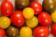 Bunte nasse Tomaten in gelb, rot und grün