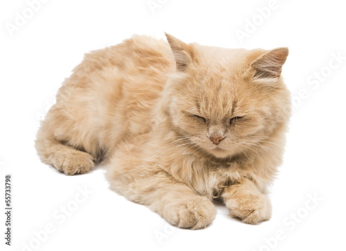 sleeping cat isolated