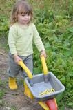 petit jardinier