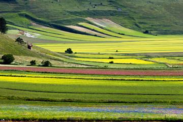 Campi coltivati a Castelluccio di Norcia, Italia