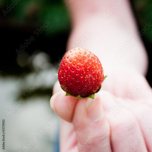 fraise offerte
