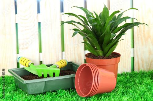 Beautiful flower in pot on grass in garden