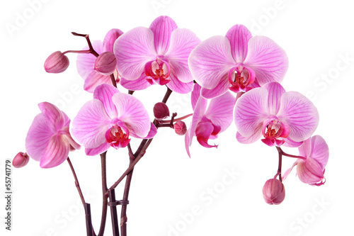 Fotobehang Orchidee Purple orchids isolated on a white background