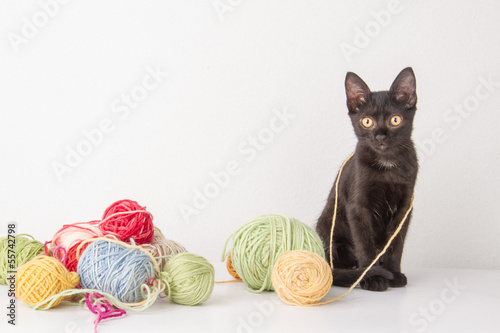 kitten and wool