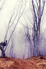 fantastic dark forest with fog