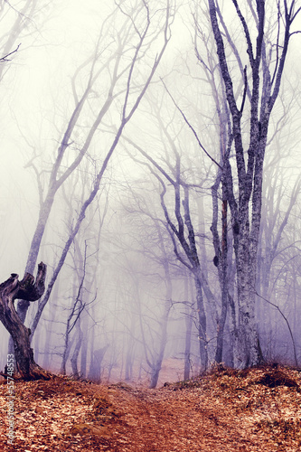 fantastic dark forest with fog - 55748553