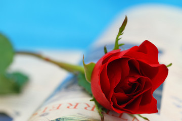 Red rose on open book on blue background