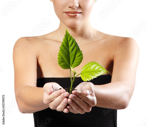 green tree shoot in female hands