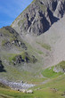 paysage alpin - moutons à l'alpage