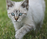 Young Cat Walking On Grass