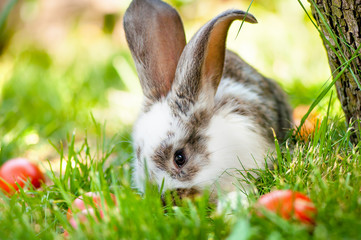 Easter bunny eating grass and playing between colorful eggs
