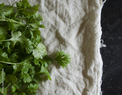 cilantro on cotton