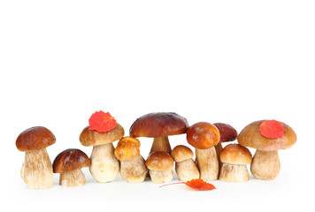 Boletus Edulis mushrooms isolated on white background.