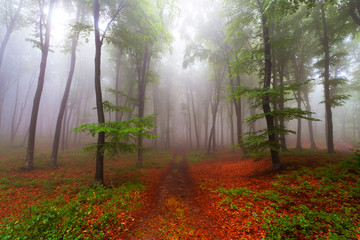 Forest trail during a foggy day. Beginning of fall