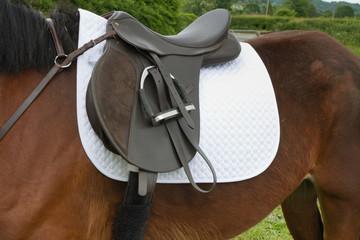 Saddled up ready to ride.