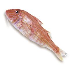 Goatfish, erhöhte Ansicht