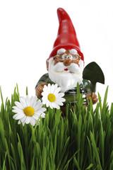 Gartenzwerg mit Spaten, Gras im Vordergrund