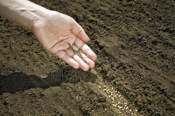 Hand placing seeds on soil