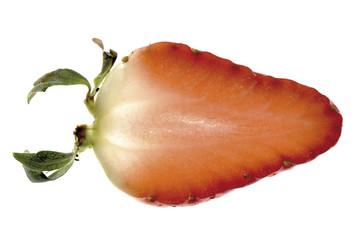 Erdbeerescheibe, Nahaufnahme