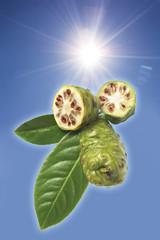 Noni-Früchte (Morinda Citrifolia)