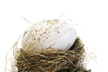 Ei im Nest, Nahaufnahme