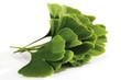 Ginko Blätter