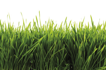 Gras, Nahaufnahme