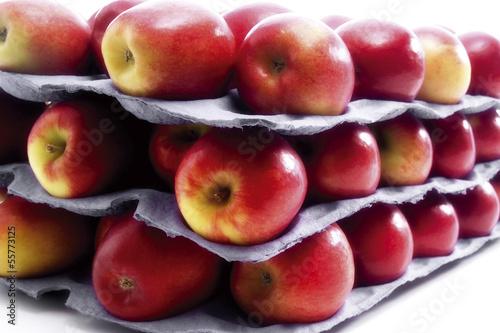 Frische Äpfel der Sorte Jazz