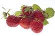Erdbeeren, Nahaufnahme