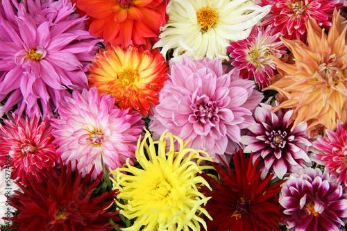 Foto Spatwand Dahlia bouquet dahlia.
