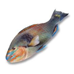 Papageienfische, erhöhte Ansicht