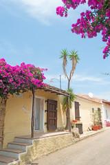 bouganvillea by the street