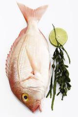 Frischer Fisch, Goldbrasse mit Algen, erhöhte Ansicht