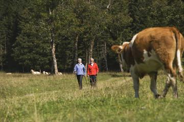 Österreich, Karwendel, älteres Paar beim Nordic Walking