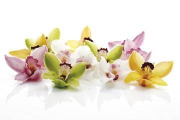 Vielfalt der Orchideenblüten (Orchidaceae) in einer Reihe
