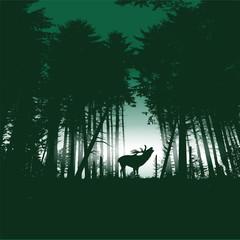 Hirsch im Fichtenwald bei Nacht