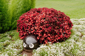 Tortoise or turtle made from begonias