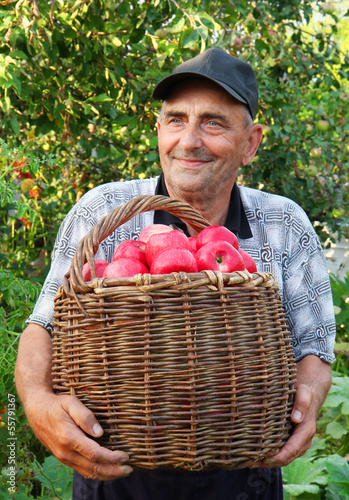 Elderly man, harvesting a apple