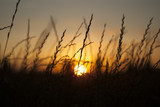 Sunset, with grass