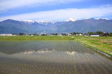 Japan Alps and paddy field, Azumino city, Nagano, Japan