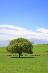 Green tree on a meadow