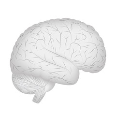 Grey human brain isolated on white background. Vector EPS10.