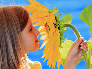Girl and sunflower - beautiful girl is smelling flower
