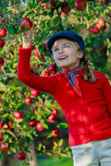 Apple orchard - girl picking red apples