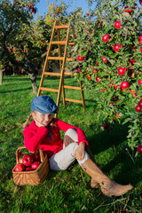 Orchard - girl picking red apples into the basket